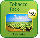Non-Hybrid Tobacco Pack